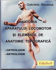 anat_ost_art