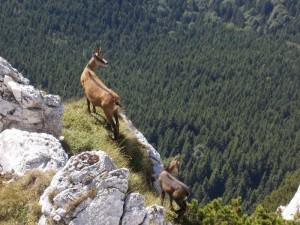 http://www.bucegipark.ro/pnb.php?show=fauna