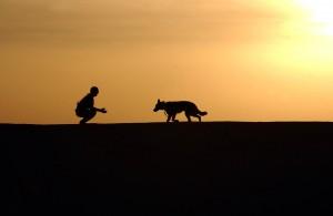 dog-659856_1280