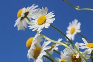 flori, cer, frumusete