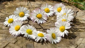 flori, coronita, inima