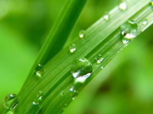 Picătură de ploaie pe frunză