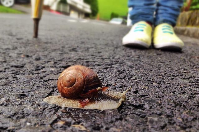 melc_snail