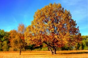 copaci, toamna