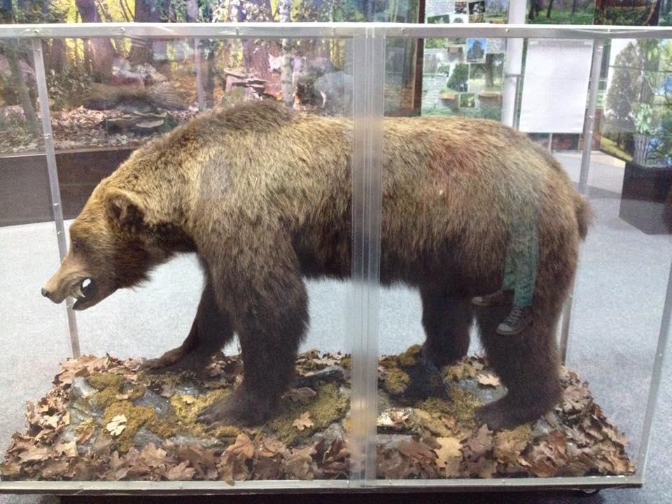 ursul mormăind