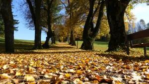 toamna, frunze, parc, copaci
