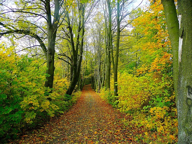 padure_forest
