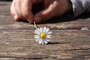 floare, mana