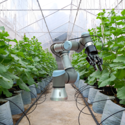 robot în agricultură